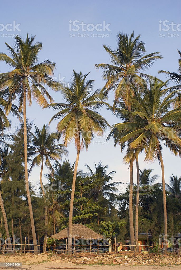 Palm trees and beach house royalty-free stock photo