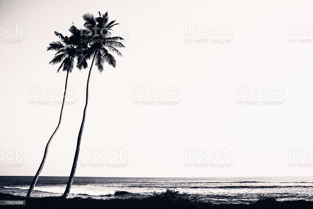 Palm Trees and Beach Silhouette stock photo