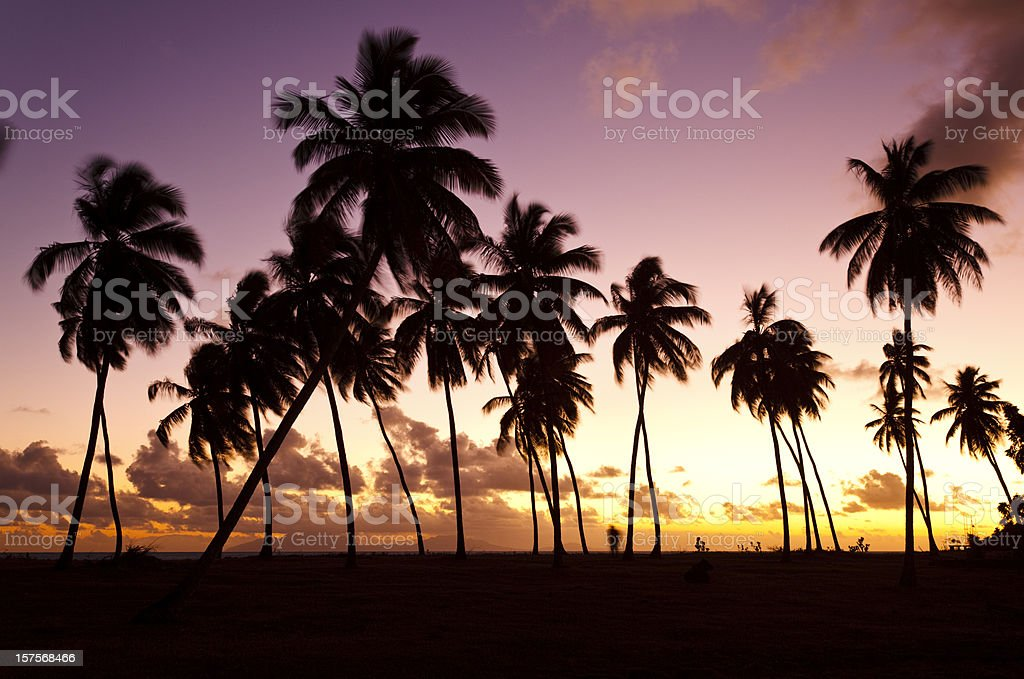 Palm Trees And Colorful Sunset stock photo