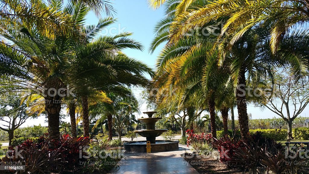 Palm trees and fountain stock photo