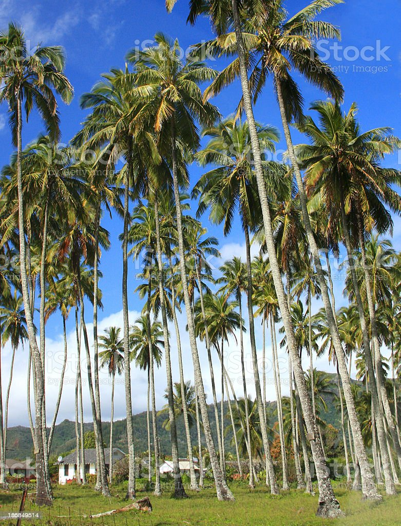 Palm trees and Hawaii house royalty-free stock photo