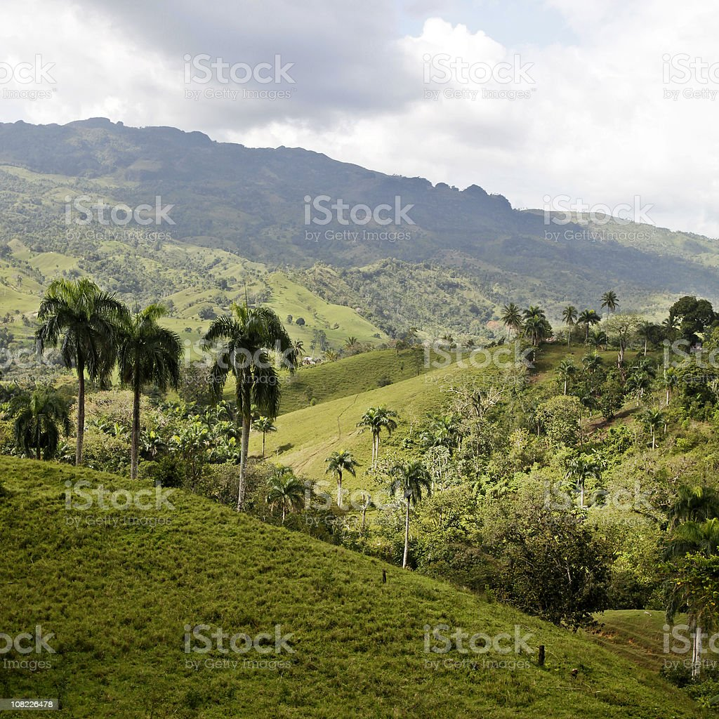 Palm Trees and Hills royalty-free stock photo