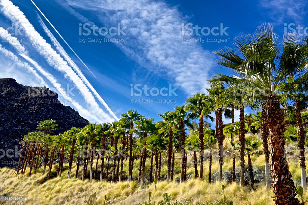 Palm trees and Mountains Landscape in Palm Springs, California, USA stock photo