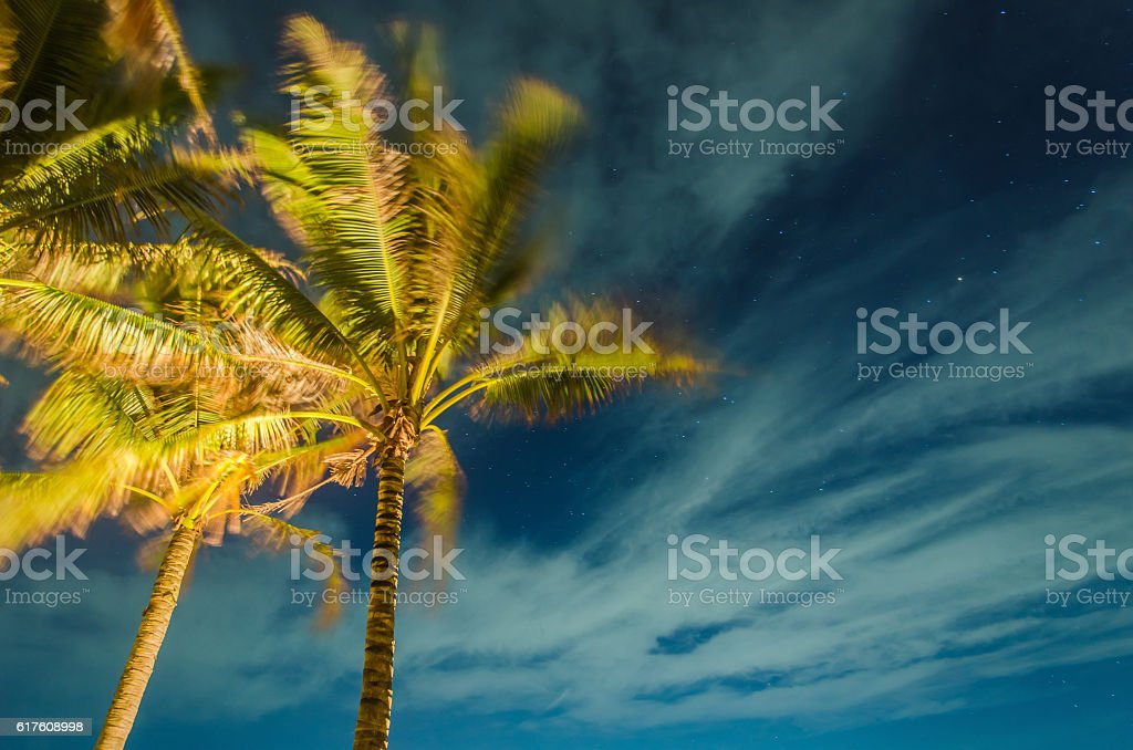 Palm trees and night sky background stock photo