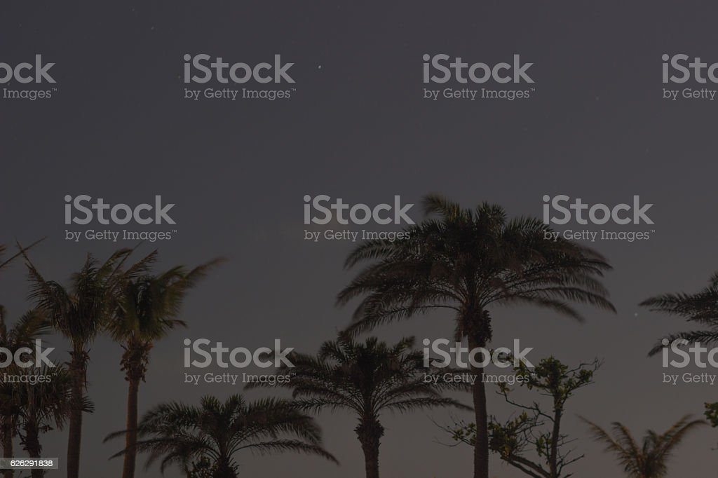 Palm trees and Night Sky in Kenting National Park stock photo