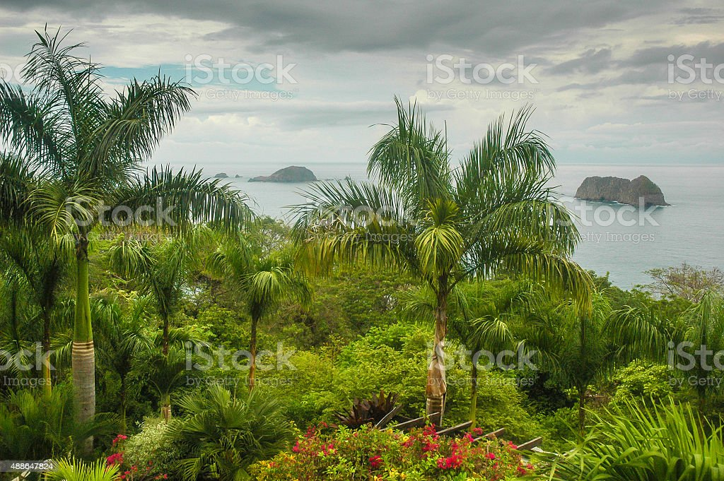 Palm Trees and Pacific Coast stock photo