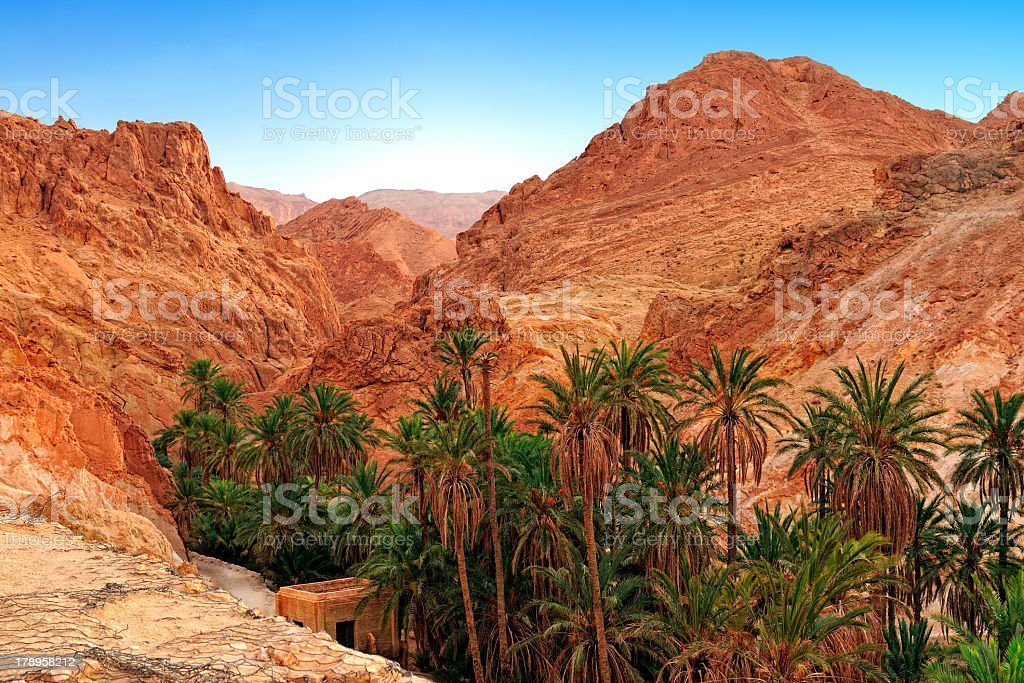 Palm trees and rocky landscape of mountain oasis Chebika stock photo