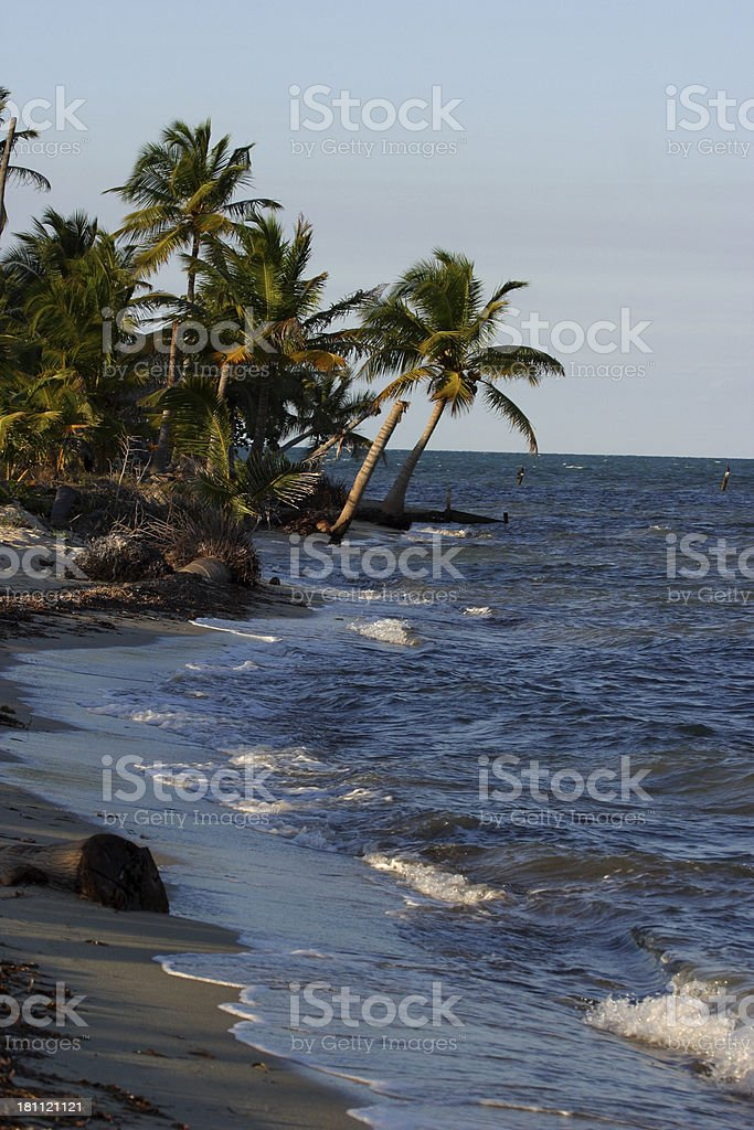 Palm trees and Sea royalty-free stock photo