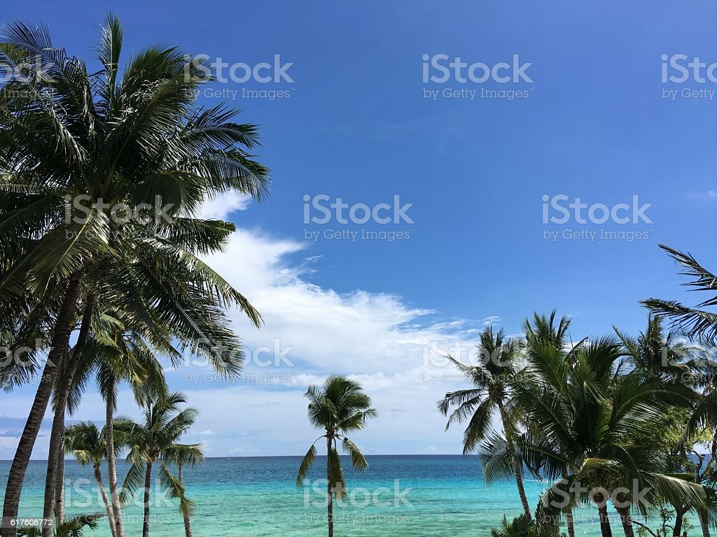 Palm trees and sea view at the beach stock photo