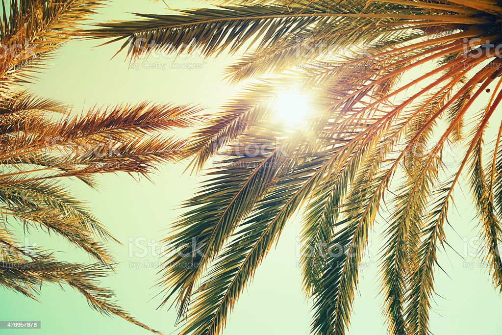 Palm trees and shining sun over bright sky stock photo