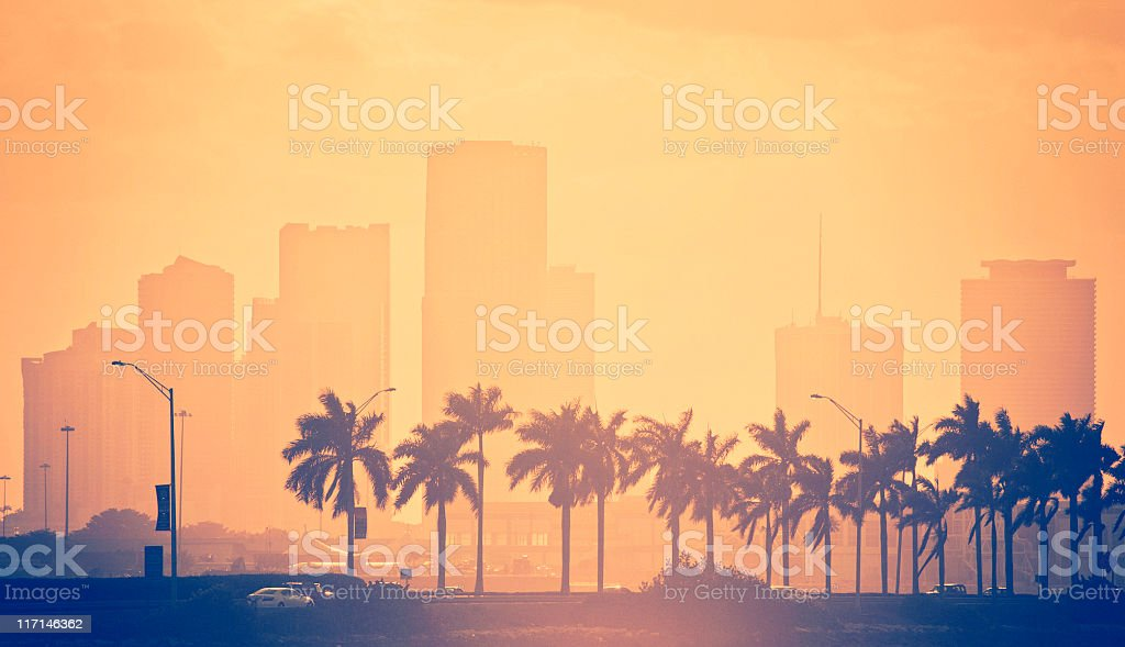 palm trees and skyline in miami stock photo