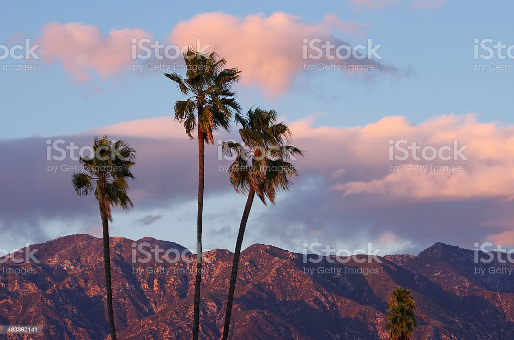 Palm Trees and Sunset Clouds stock photo