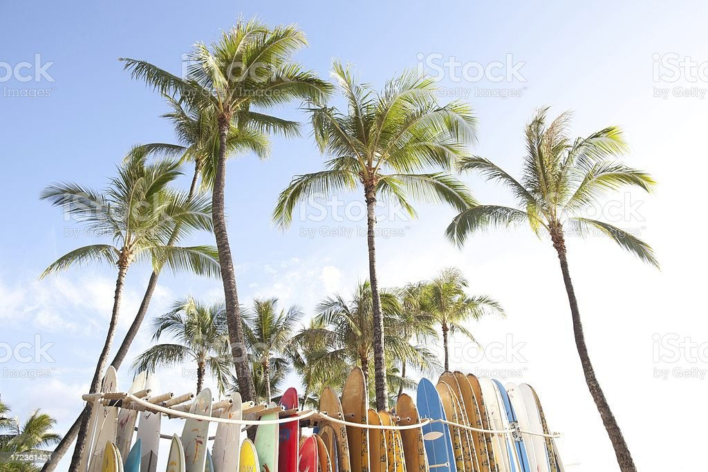 Palm trees and surfboards royalty-free stock photo