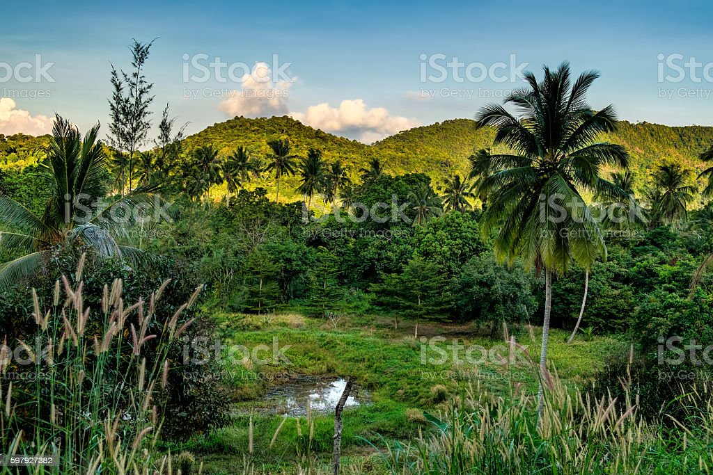 Palm trees and Thai dense tropical vegetation stock photo