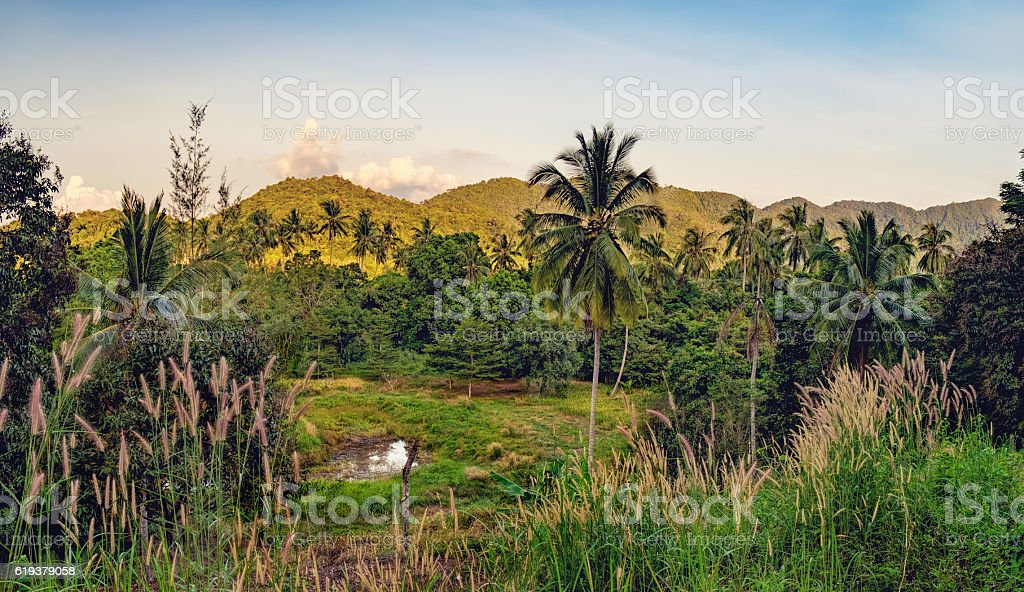Palm trees and Thai dense tropical vegetation stock photo