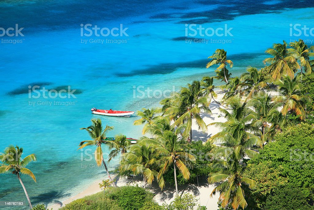 Palm Trees and Turquoise Water stock photo