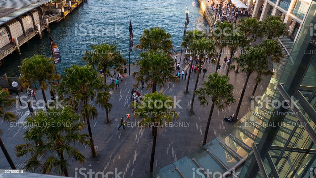 Palm trees at Circular Quay Sydney 4k stock photo
