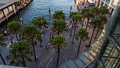 Palm trees at Circular Quay Sydney 4k