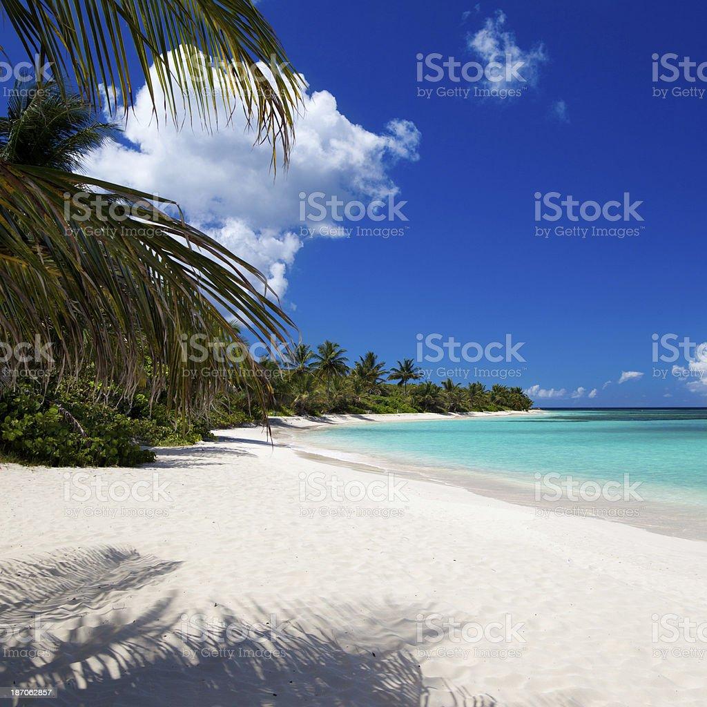 palm trees at Flamenco Beach on Culebra, Puerto Rico royalty-free stock photo