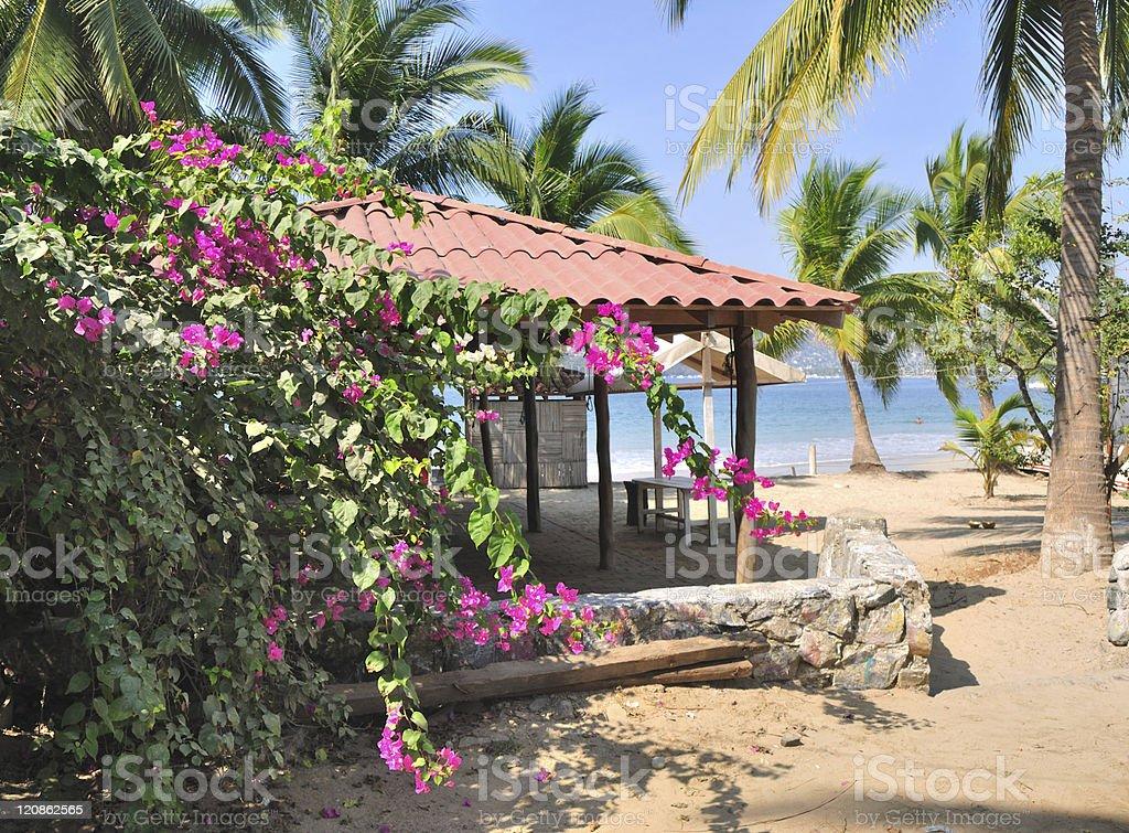Palm Trees At La Ropa Beach stock photo