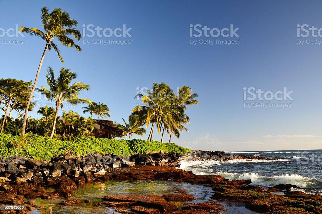 Palm trees at Lawai Beach - Poipu, Kauai, Hawaii, USA stock photo