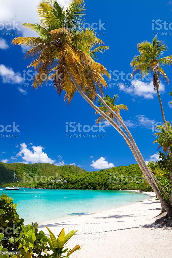 palm trees at Maho Bay Beach, St.John, US Virgin Islands stock photo