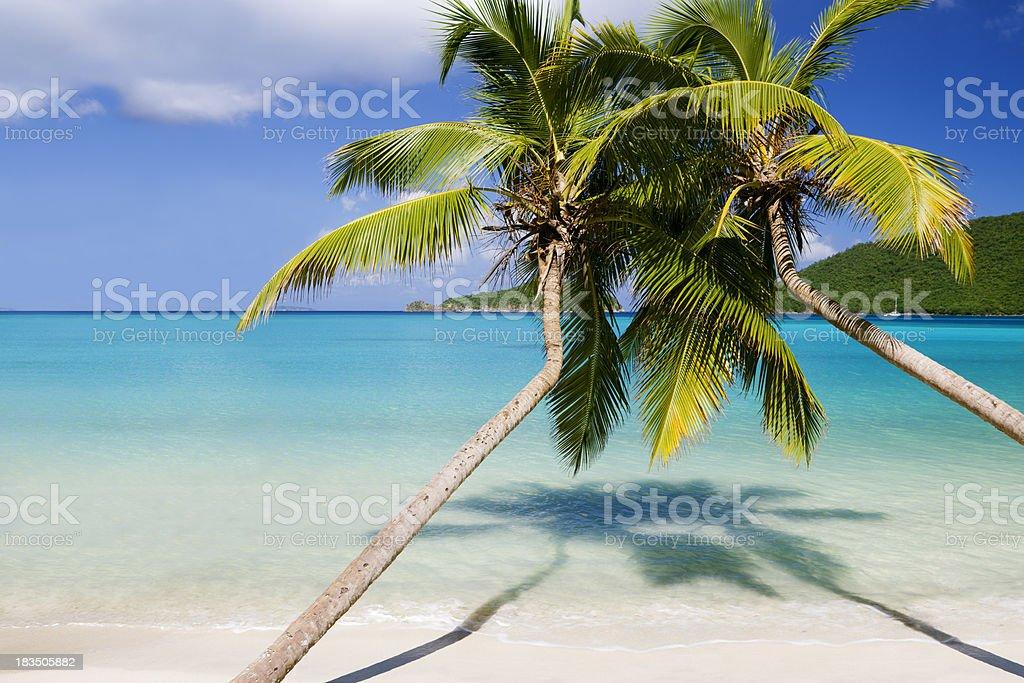 palm trees at Maho Bay, St.John, US Virgin Islands stock photo
