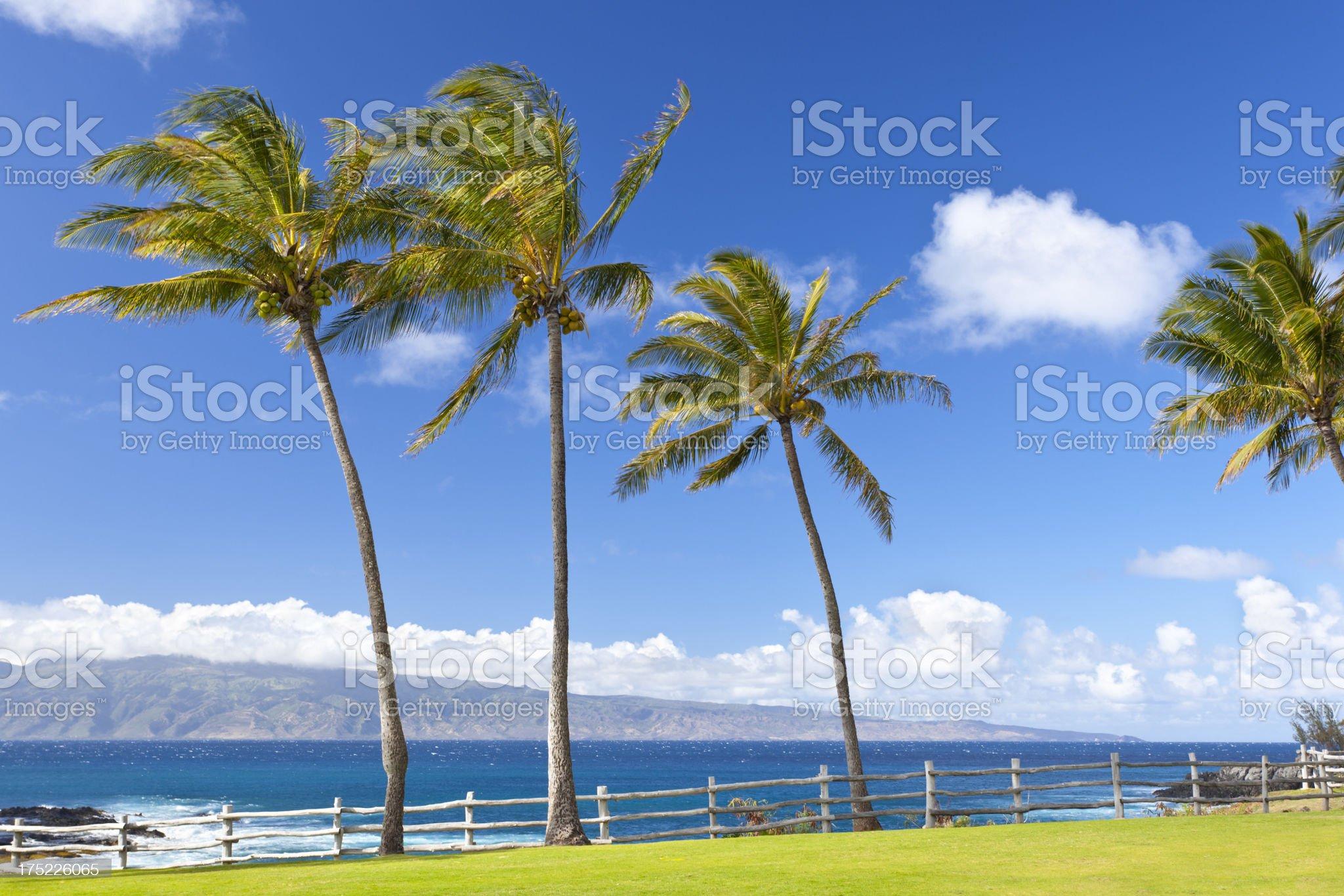 Palm Trees At Napili Point, Maui royalty-free stock photo