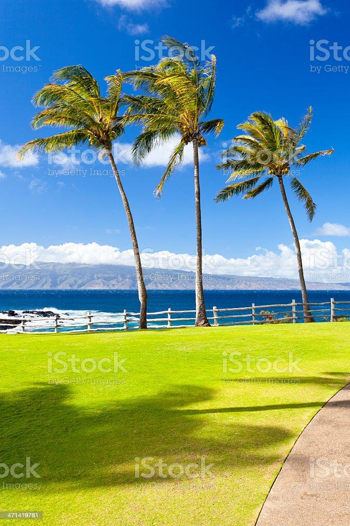 Palm Trees At Napili Point, Maui stock photo