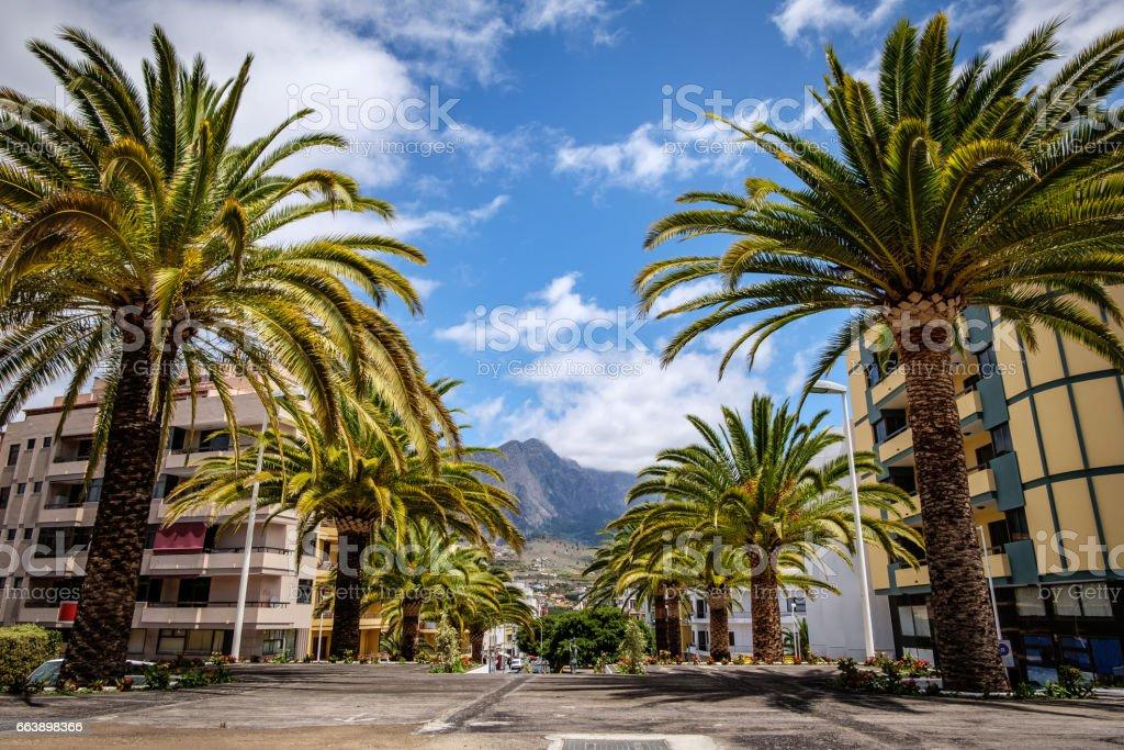 Palm Trees at Plaza del la Constitución, Los Llanos, La Palma, Spain stock photo