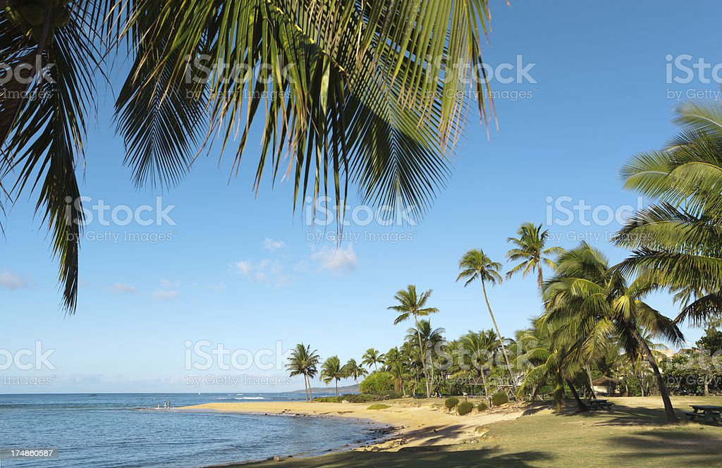Palm Trees at Poipu Beach of Kauai Hawaii royalty-free stock photo