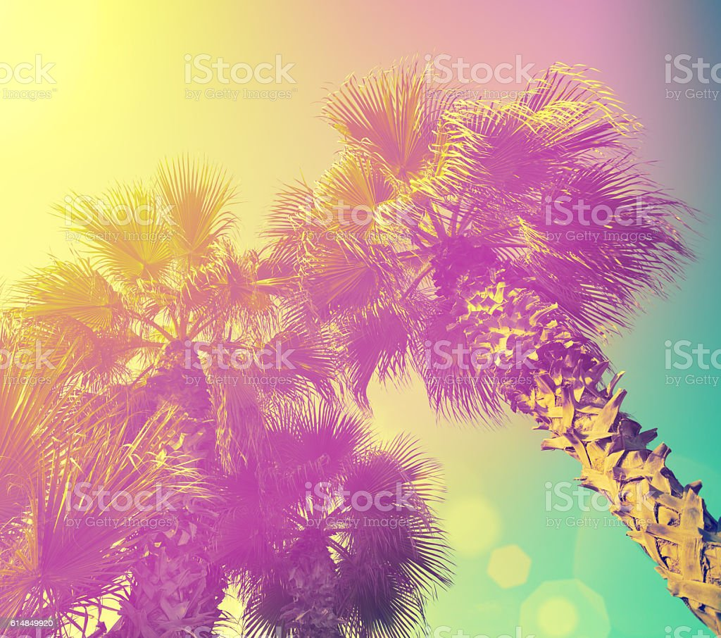 Palm trees at purple yellow sunlight stock photo