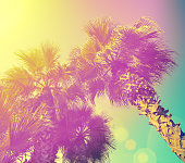 Palm trees at purple yellow sunlight