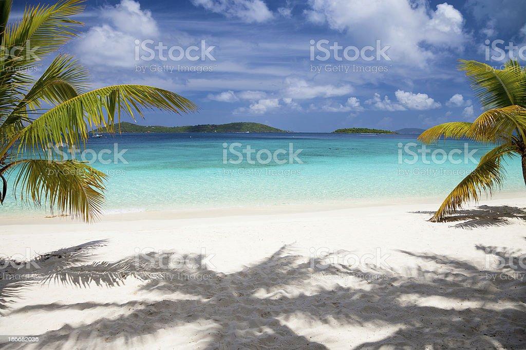 palm trees at Salomon Bay Beach in Saint John, USVI royalty-free stock photo