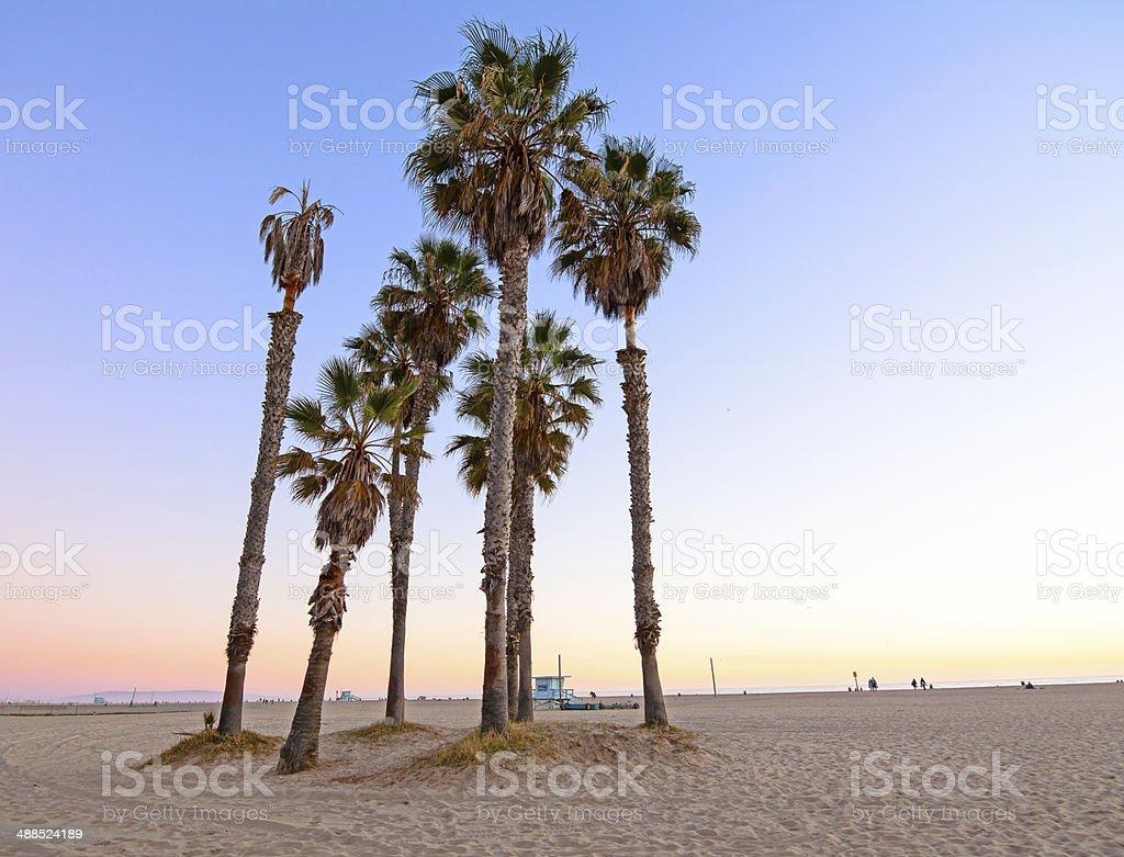 Palm Trees at Santa Monica Beach California stock photo