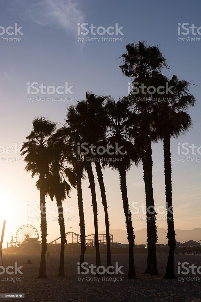 Palm trees at Santa Monica Beach in Los Angeles County stock photo