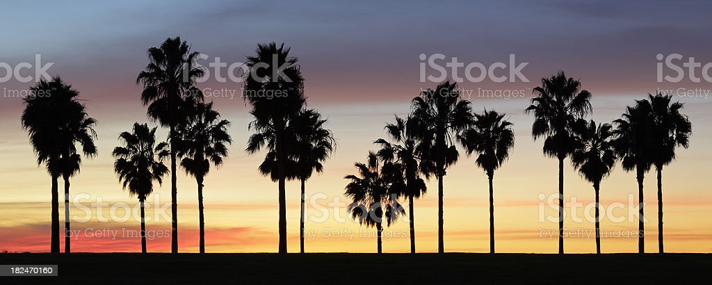 Palm Trees at Sunset royalty-free stock photo