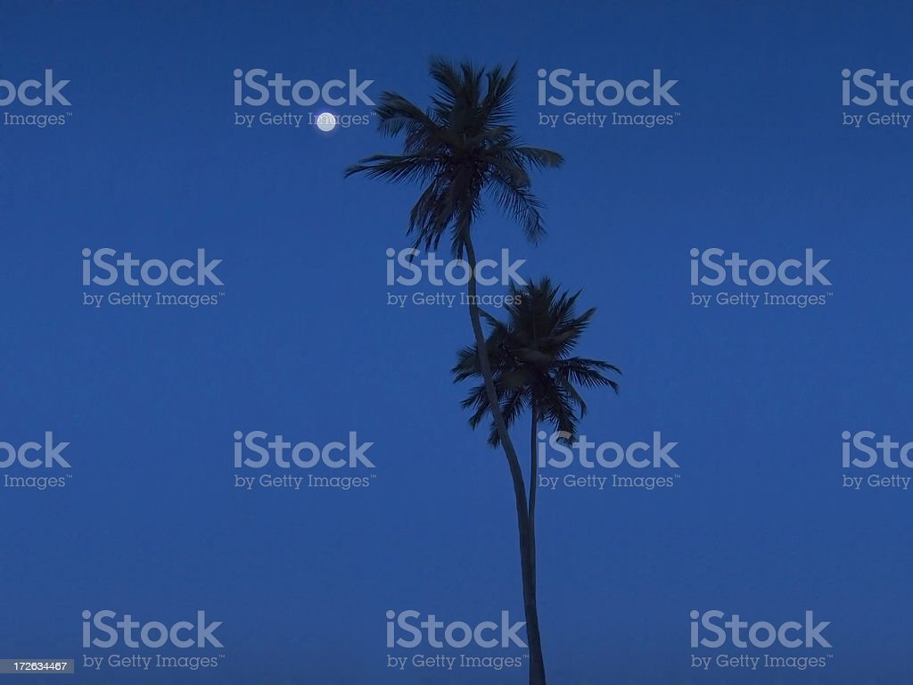 palm trees at the moonlight royalty-free stock photo