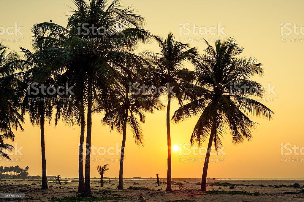 Palm trees at the tropical coast in Sri Lanka stock photo