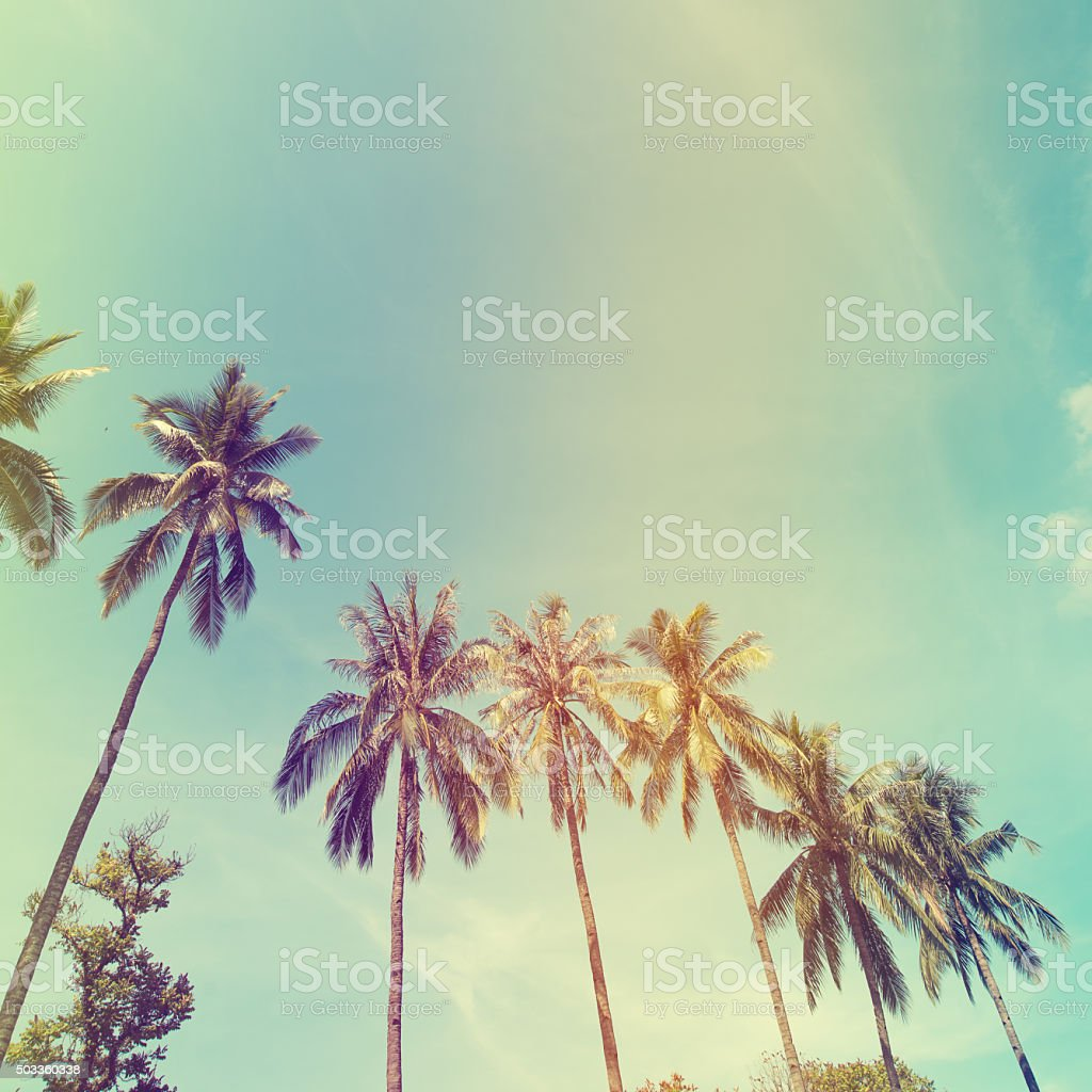 palm trees at tropical coas stock photo