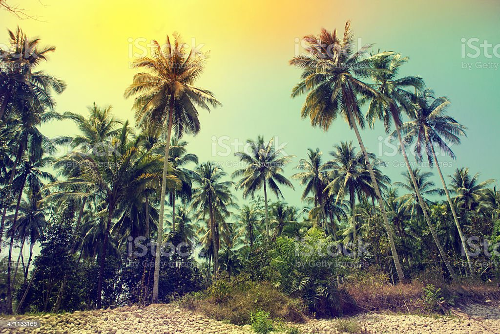 Palm trees at tropical coast, vintage toned stock photo