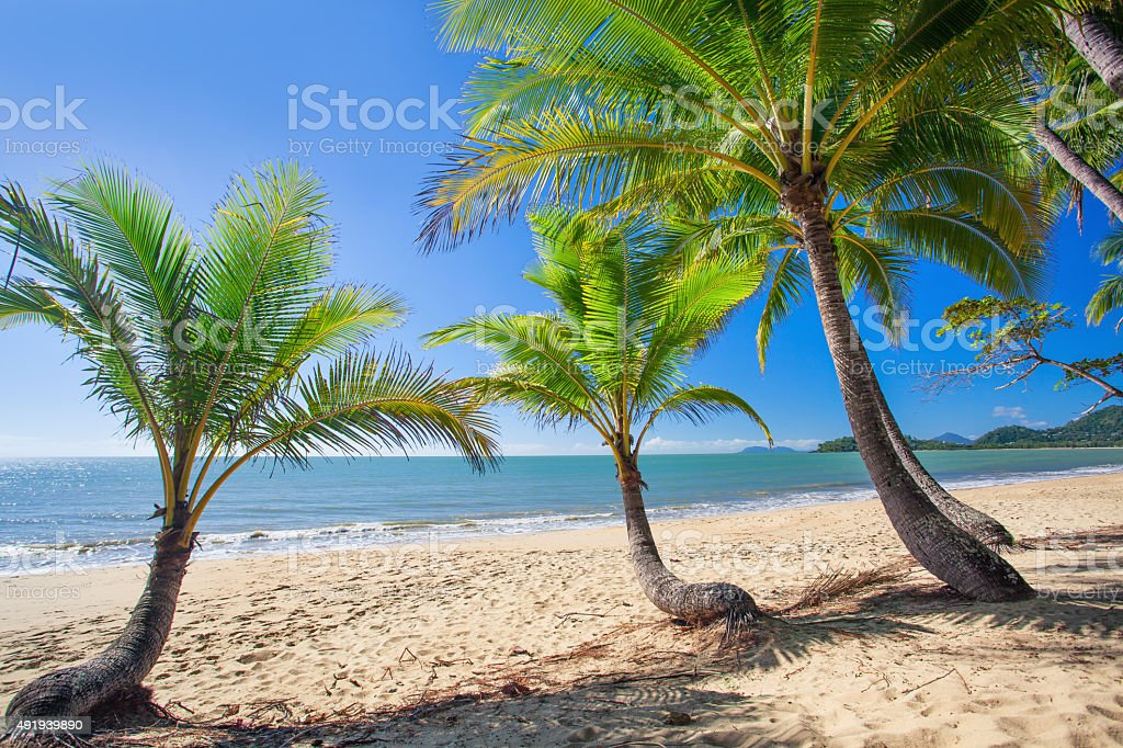 Palm trees at tropical Palm Cove beach in north Queensland stock photo