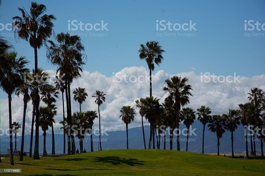 Palm Trees at Venice Beach royalty-free stock photo