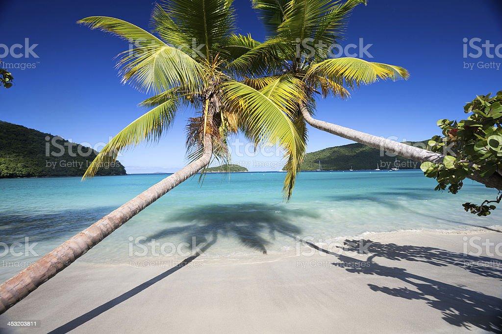 Palm trees beach and aqua blue water. stock photo