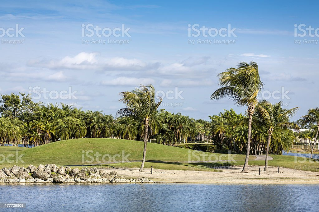 Palm trees by green lawn resort in Naples, Florida royalty-free stock photo