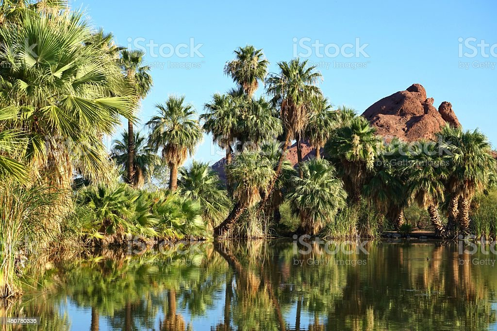 Palm Trees by Lake stock photo