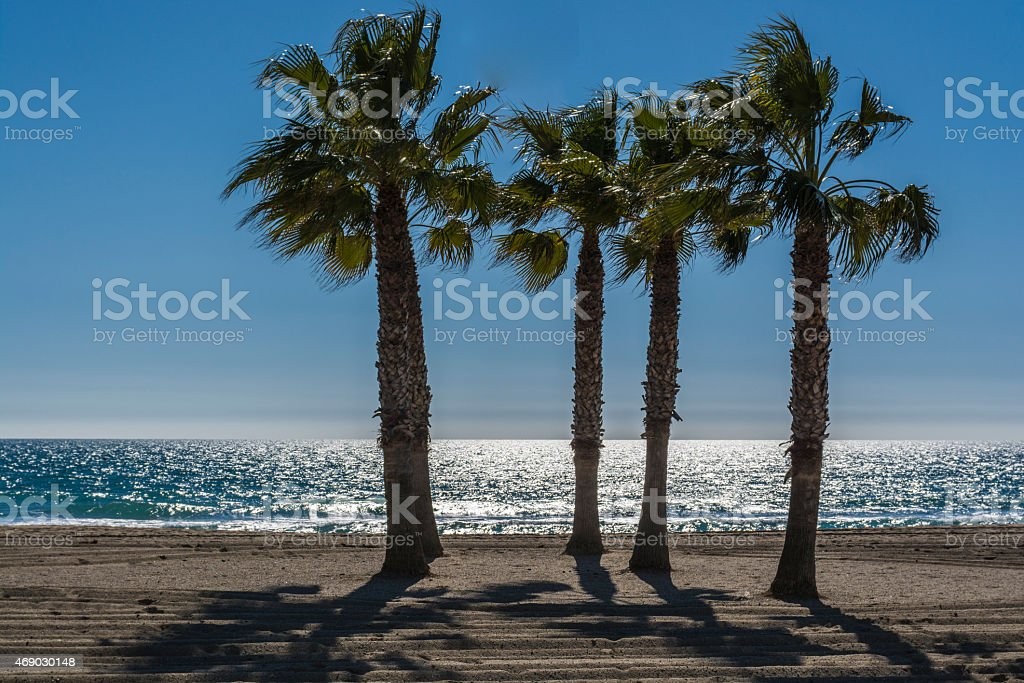Palm trees by the sea on a sunny day stock photo