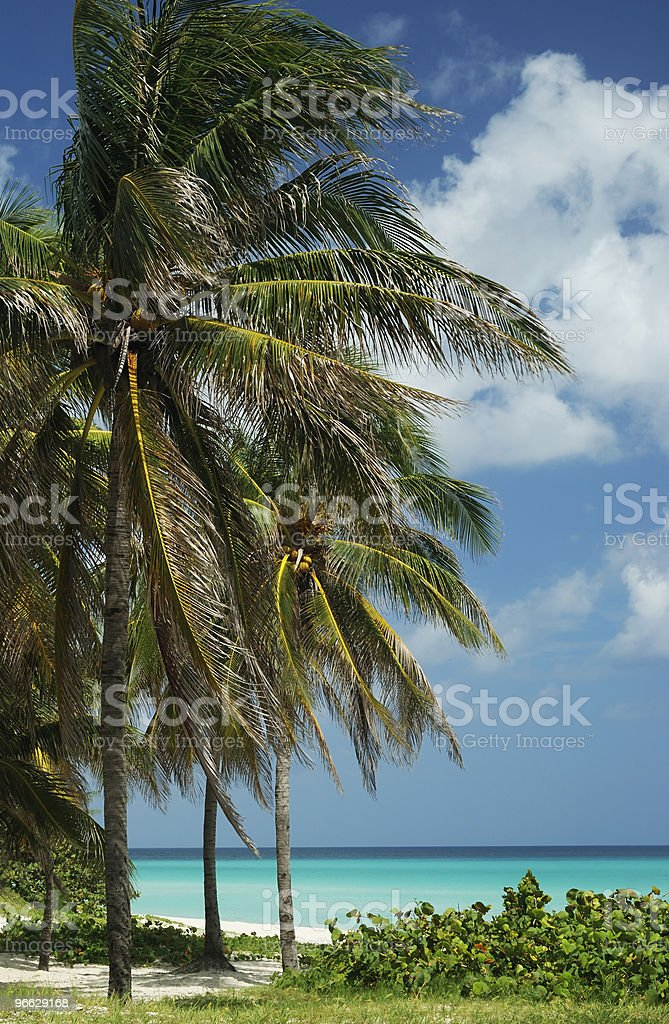 Palm trees by the sea stock photo