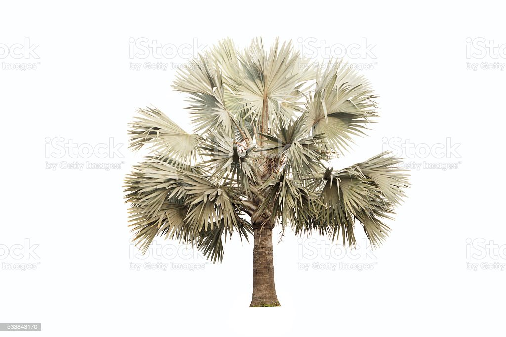 Palm trees decor isolated on white. stock photo