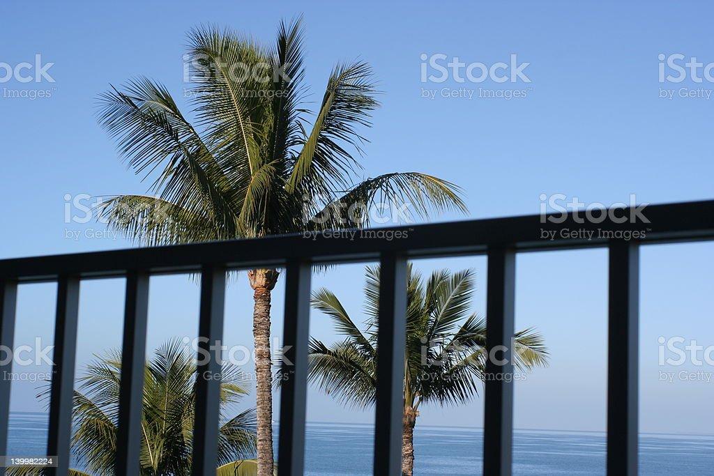Palm trees from the balcony royalty-free stock photo